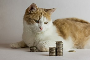 cat-staring-at-coins-investing-money-stock-market-getty_large